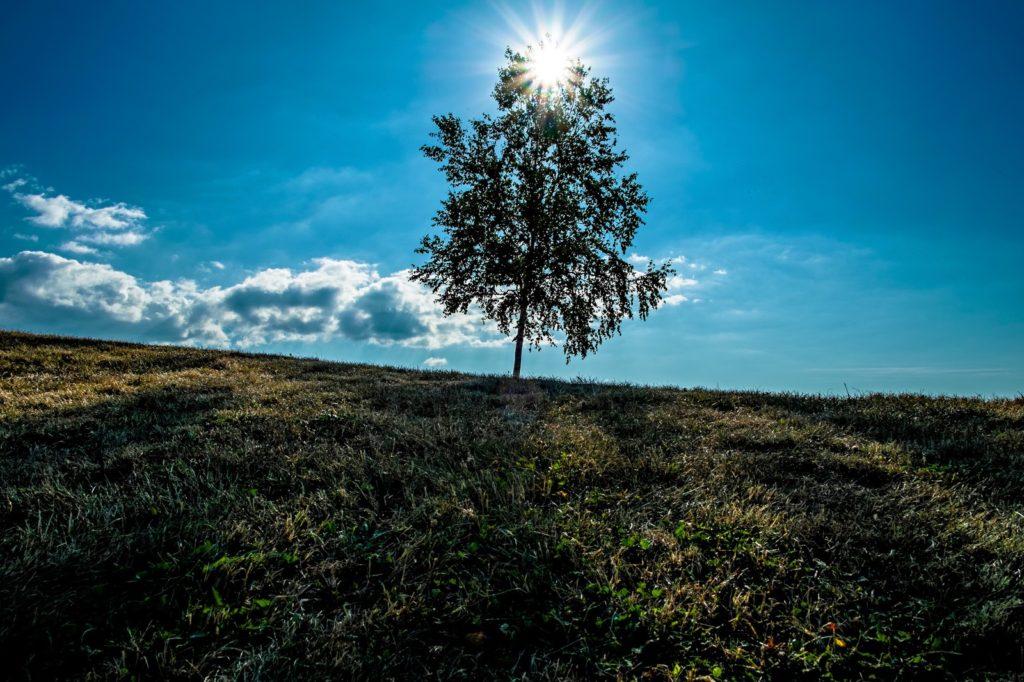 草原に生える一本の木