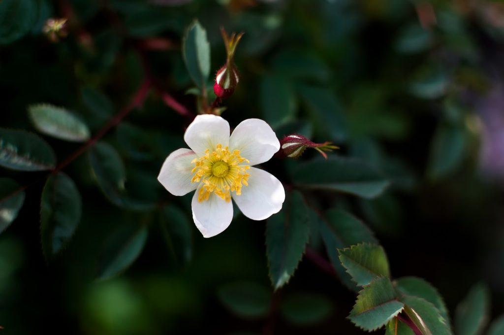小さい白い花