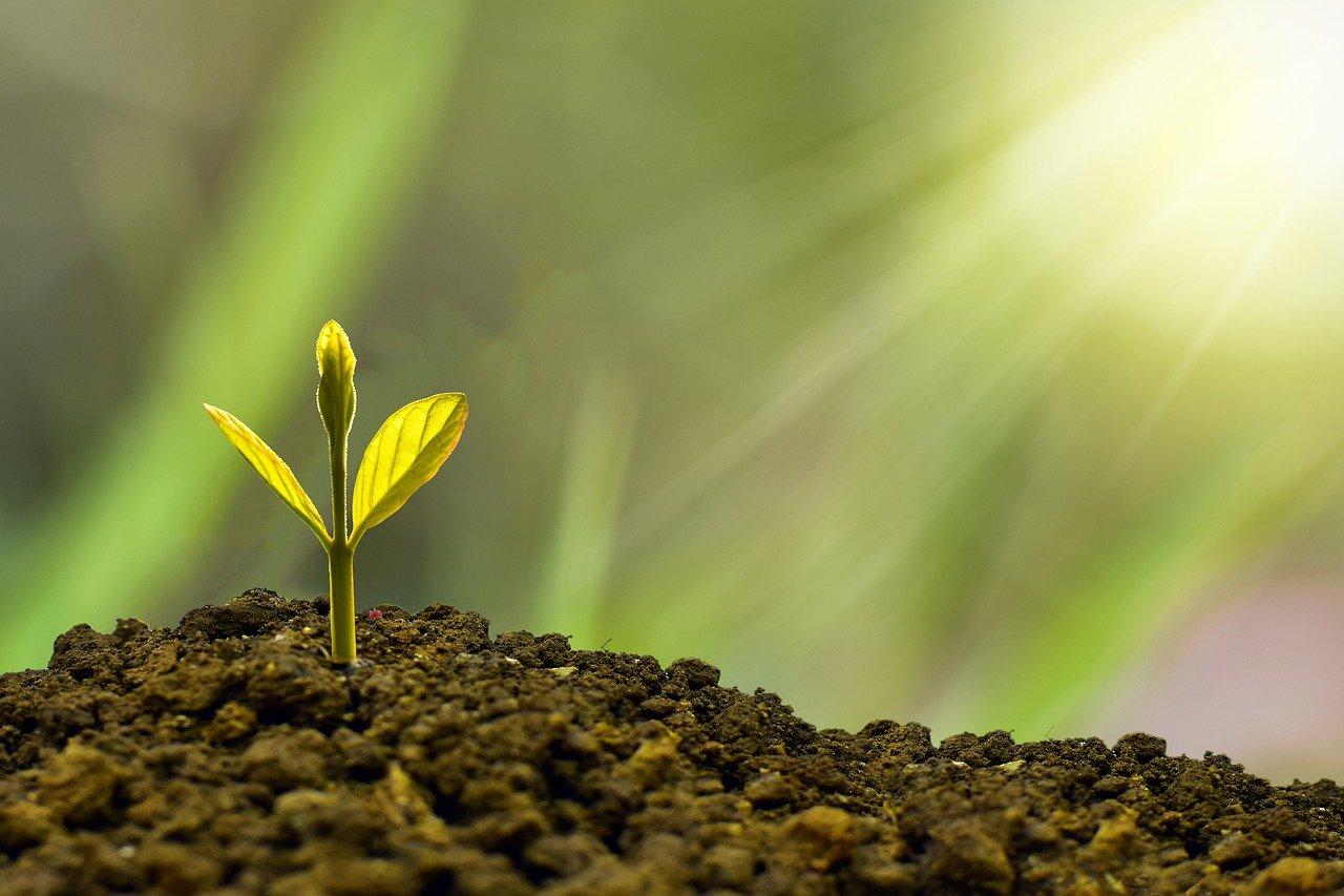 植物の芽が出る