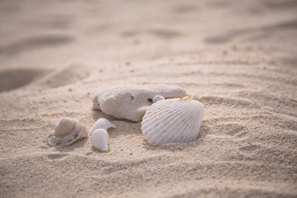 砂浜に落ちた貝殻