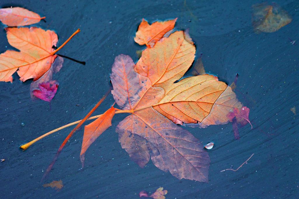 落ち葉が水面で揺れる