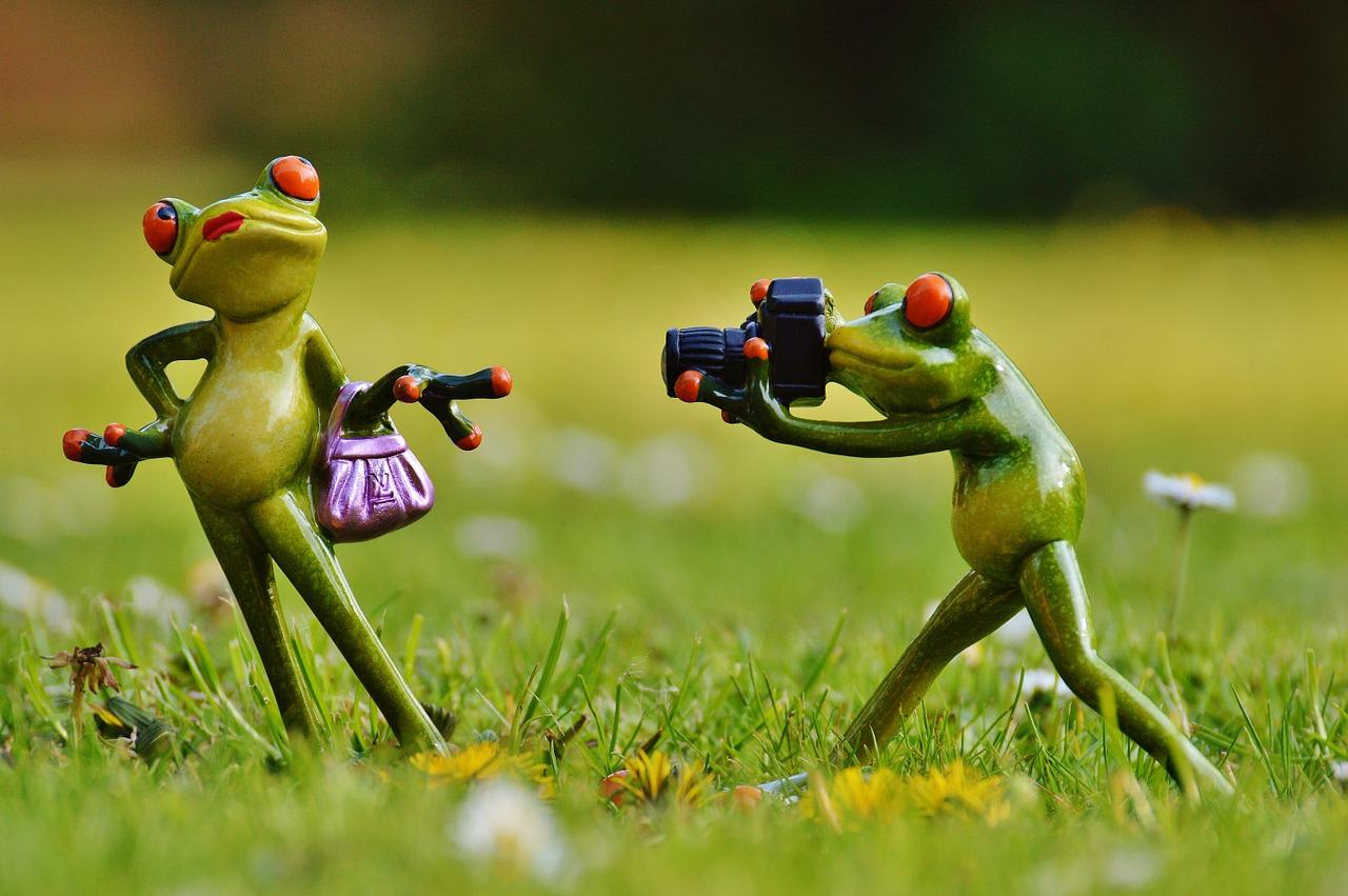 カエルのカメラマン