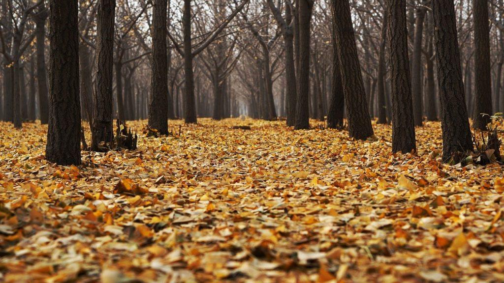 落ち葉がたくさん
