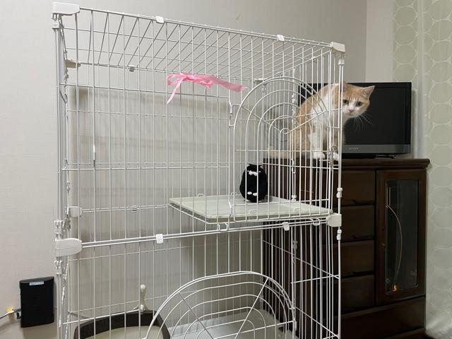 アイリスオーヤマの猫用ケージ