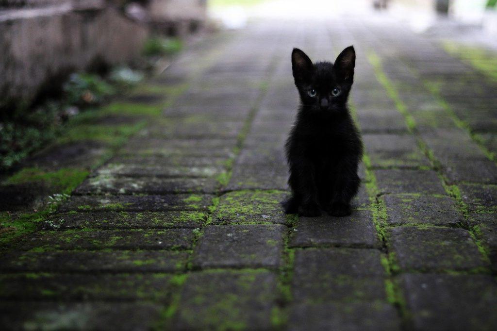 道路で佇む黒猫
