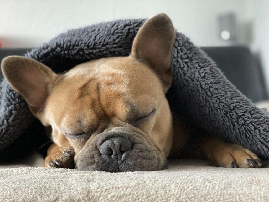 気持ちよく眠る犬